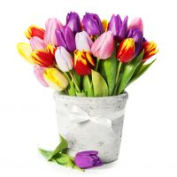 flowers life still tulips bucket flower garden wallpapers free download